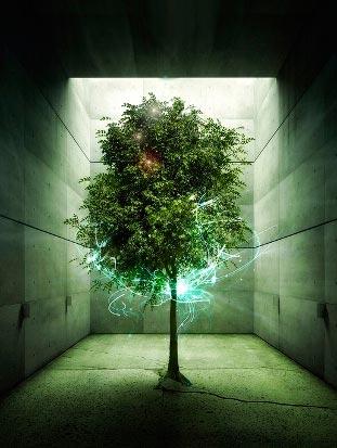 12 природных законов, или как сохранить жизненную энергию