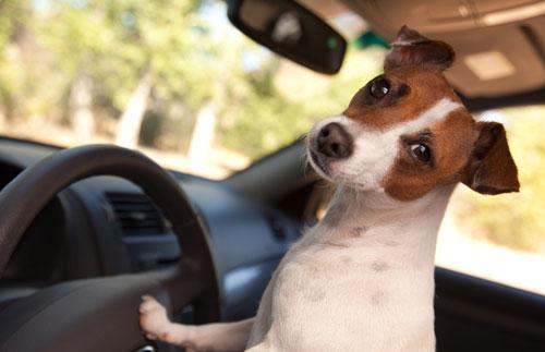 Как облегчить перевозку собаки в машине