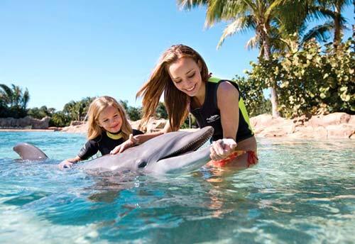 Прогулки с дельфинами