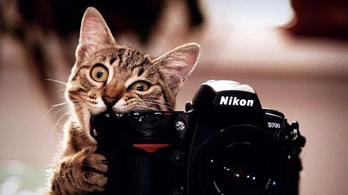 Выбираем фотографа на праздник