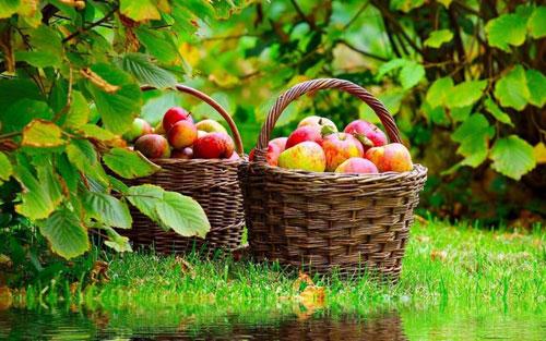 Яблочные вкусняшки