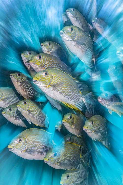 Невероятные фото подводного мира (12 фото)