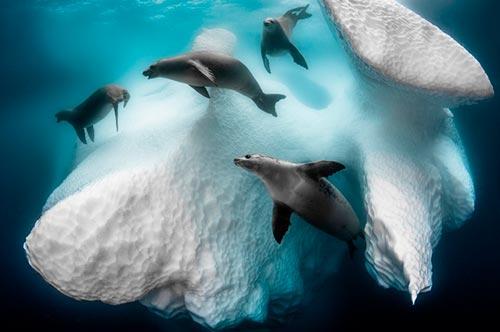 Невероятный мир дикой природы: 8 победителей фотоконкурса BigPicture 2020