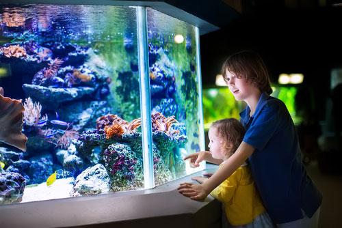 Плюсы и минусы аквариума