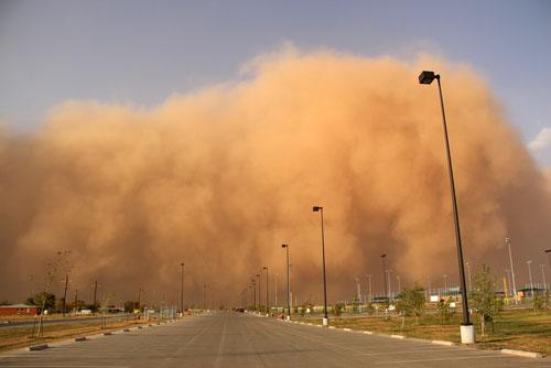 Аллергия на пыль правила для защиты от пылевых клещей