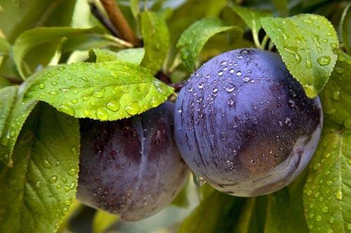 10 очень необычных овощей и фруктов (фото)