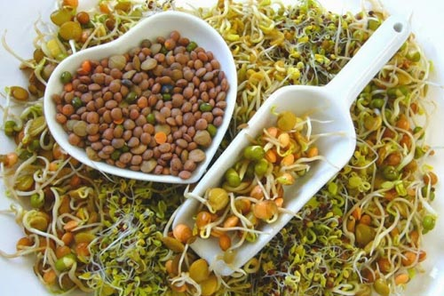 10 причин есть пророщенные семена и зерна