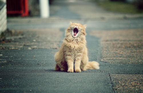 5 причин взять кошку с улицы