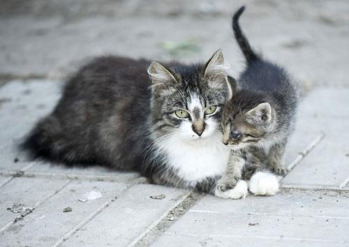 взять кошку с улицы