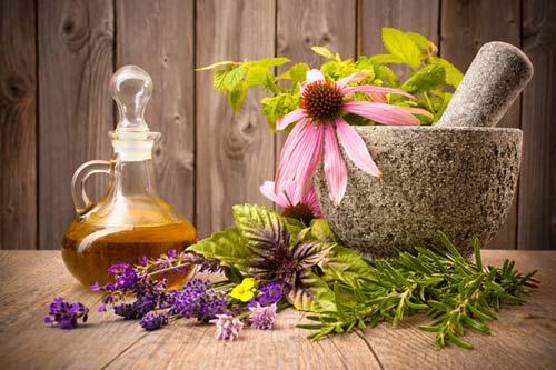 Растения — помощники недуга