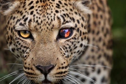 10 лучших снимков National Geographic за 2015 год