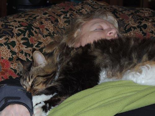 20 фотографий беспредельной наглости котов