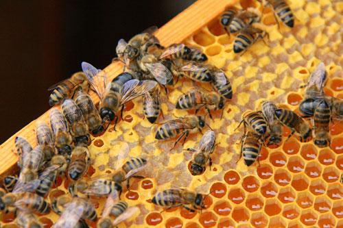 Польза от продукции пчеловодства