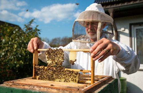Продукты пчеловодства: лучшее от природы