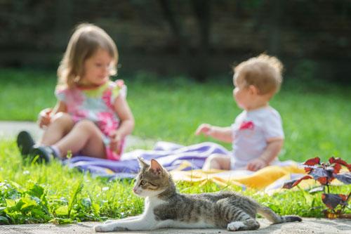 Как научить детей верно обращаться с котами