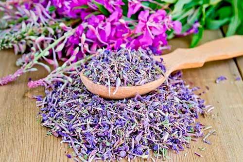 Чем полезен для здоровья иван-чай?