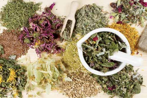 Лечебные травы и другие природные помощники