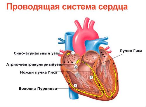 Препараты от аритмии