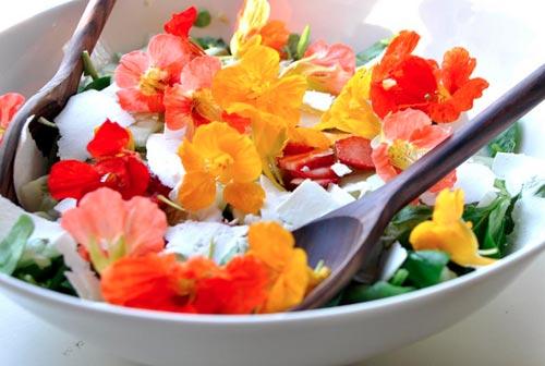 10 причин использовать в рационе питания съедобные цветы