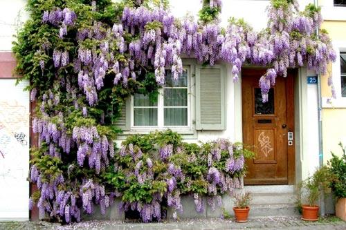 Самые красивые дома, утопающие в цветах (15 фото)