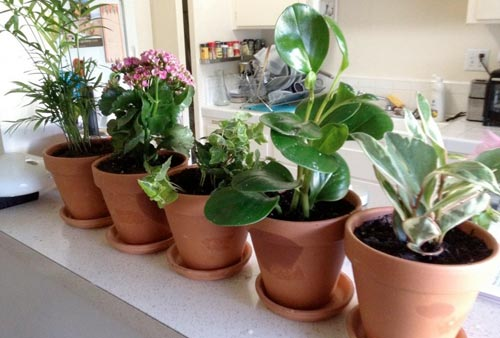 Сколько комнатных растений необходимо для комфорта?