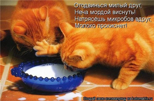 Эти забавные коты