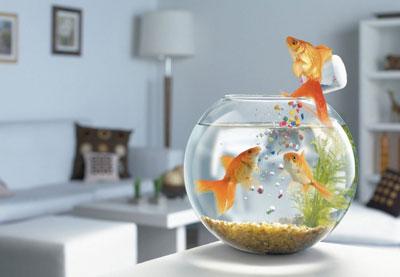Обои Аквариумные рыбки картинки, фотографии.  Маленькие рыбы в аквариуме обои для рабочего стола.