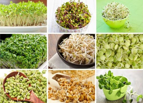 Как употреблять пророщенные семена
